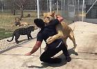 Messico, l'abbraccio della leonessa all'uomo che l'ha adottata