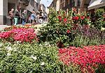 FOTO Le invasioni botaniche (domenica 30 aprile)