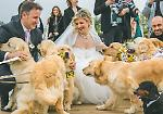 FOTO A Salvirola matrimonio con 12 cani
