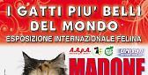 I gatti più belli del mondo a Madone (Bg)