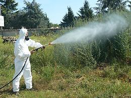 Comune, prosegue attività per contrastare la diffusione delle zanzare