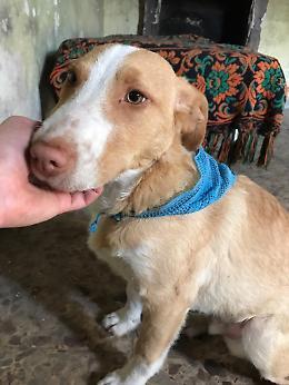 Yago, cucciolone di 4 mesi, cerca casa