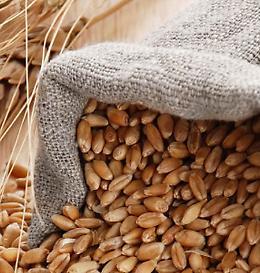 Farina di grano duro Perciasacchi