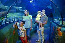 Gardaland Sea Life Aquarium, primo in Italia di 50 nel mondo