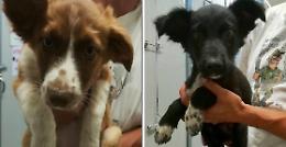 Tre cuccioli 'gettati', appello della clinica