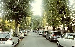 Via Bacchetta, alberi da abbattere: appello del M5S in Regione per salvarli