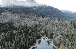 La foresta dei violini piegata dal maltempo