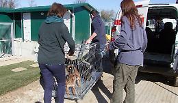 Il canile rischia il collasso: troppi cuccioli abbandonati