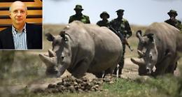 Creati due embrioni contro estinzione rinoceronte bianco