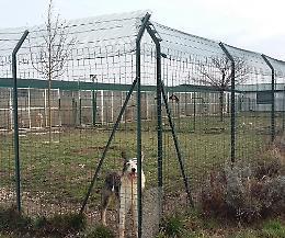 Anpana di Cremona alla ricerca di uno spazio per il nuovo rifugio per i cani