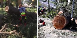 Parco Oglio, pulizia e recupero di quasi 80 mila alberi