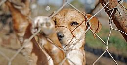 Coronavirus, boom di animali abbandonati: 'Ma non contagiano'