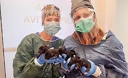 Sei cuccioli salvati dai carabinieri