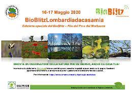 Quest'anno il Bioblitz Lombardia è «Da casa mia»