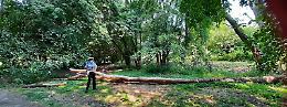 Parco Nassirya, alberi crollati e altri a rischio