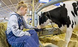 Fiera del bovino a dicembre  nella capitale della zootecnia