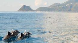 Il delfino Pino da 18 anni alle Eolie, 'adottato' da isolani