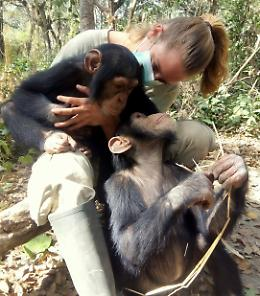 Cura gli scimpanzé orfani: 'La mia missione d'amore'