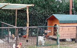 Uccisi e rubati animali in fattoria didattica a Fiumicino