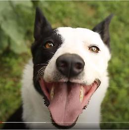 """VIDEO """"Intervista"""" a Holly, il cane protagonista di Basker"""
