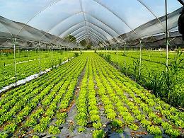 Agroalimentare, Generazione Z punta su Made in Italy e sostenibilità