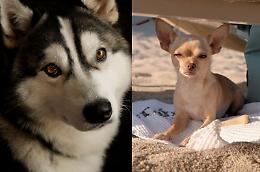 Giornata mondiale del cane, il migliore amico dell'uomo star dei social