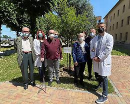 Alla Fondazione Germani piantato il 'melograno del sollievo'