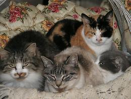 Pasquali: «Soluzione duratura per il gattile sotto sfratto»