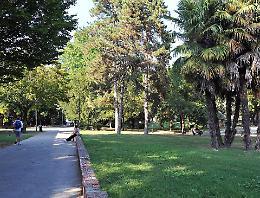 Nessun  bando, il Comune: «Nuovi alberi  a nostre spese»