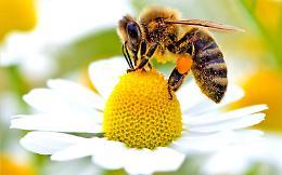 """""""Comune amico delle api"""", l'impegno sostenibile dell'amministrazione"""