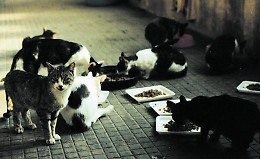 Nuovo gattile, per l'Ats il trasferimento è ok