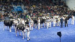 Mostra zootecnica e asta del bestiame: ecco le nuove Fiere Internazionali