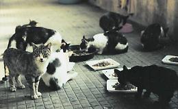 """Caso gattile, Ventura: """"Comune, completa impreparazione sull'argomento"""""""