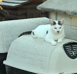 «Il gattile  al completo», mici pure a casa dei volontari