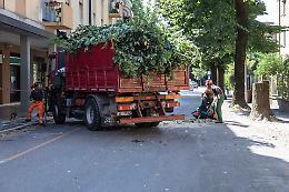 Taglio alberi: «Piantumazioni, ora un piano insieme alla città»
