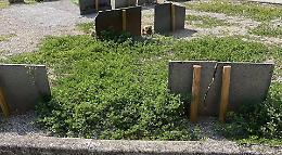 Cimiteri invasi dalle erbacce, ira e sdegno