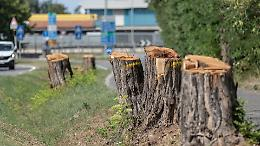 Gli ecologisti non arretrano: Tac agli alberi «condannati»