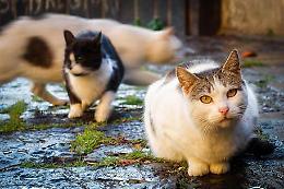 Lesignano Bagni, il paese dove spariscono i gatti: 50 da fine maggio