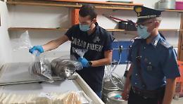 Nutrie congelate servite nei tramezzini, operazione del Nas di Cremona