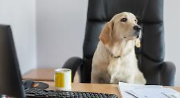 Cani in ufficio, ma i padroni li hanno lasciati a casa
