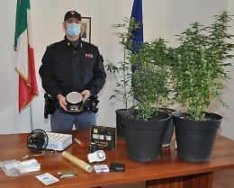 Serra di marijuana nell'appartamento, arrestato 40enne