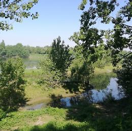 Immersione forestale al Parco Po