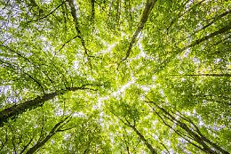 Inaugurazione della mostra Verso il Piano del Verde