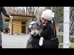 """VIDEO L'appello di Lara Magoni: """"A Natale adottate un cane"""""""