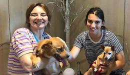 Poteva morire, nuova vita in famiglia per il cane Salvo