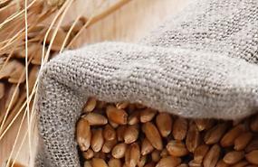 Confagricoltura, la filiera grano duro-pasta punta sulla premialità