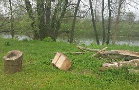 Boscaiolo abusivo sega gli alberi lungo il Serio