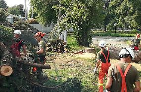 Parco Oglio, boschi distrutti: catastrofe ambientale