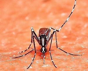 Un 40enne affetto da febbre Dengue - La Provincia