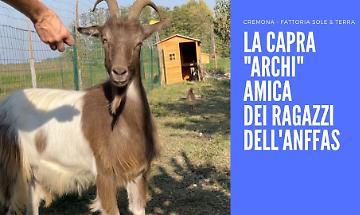 Dal canile alla fattoria didattica: la capra Archi nuova amica dei disabili